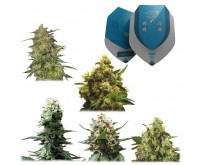 Medizinische Mix CBD (Royal Queen Seeds) 5 Samen
