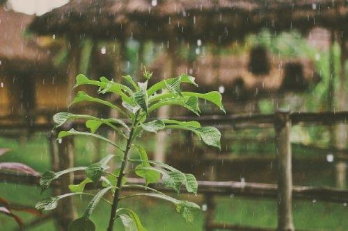 Regenwasser für den Cannabisanbau Dutch Headshop